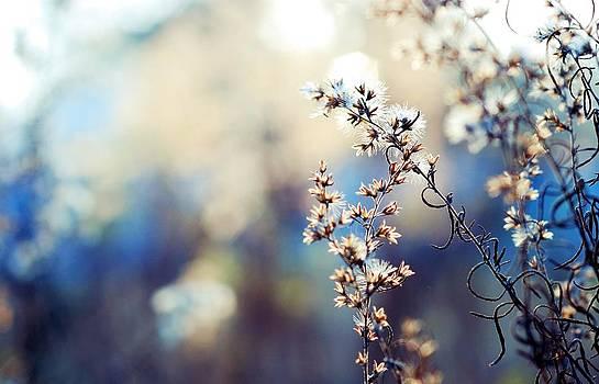 Wildflowers In Blue by Kendra Longfellow