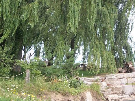 Willows At The Lake by Lisa Stunda