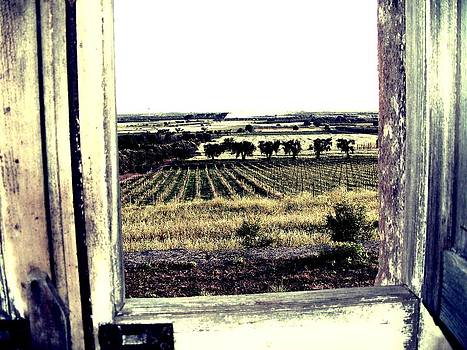 Window by Simona Schirinzi