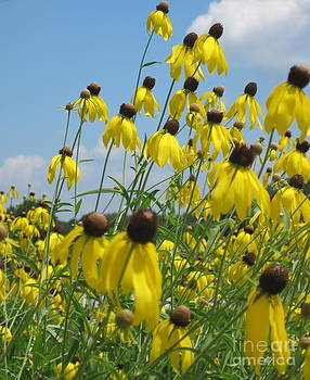 Windy Susans by Diane Stresing
