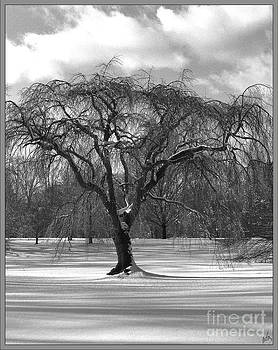 Winter Day Arboretum Oyster Bay   by H Scott Cushing