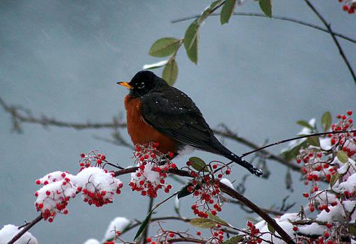 Winter Feeding Robin 2 by Wendy Emel