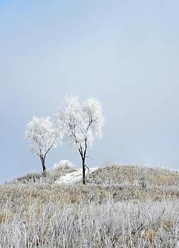 Julie Palencia - Winter Frost