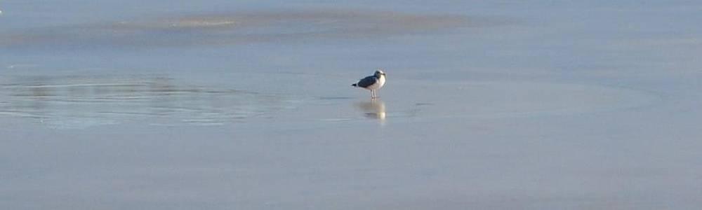 Winter gull by Anne Marie Spears