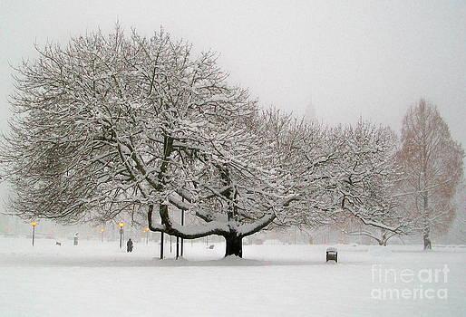 Winter Spread by Michael Wyatt