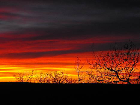 Winter Sunset by Rebecca Cearley