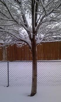 Winter tree by Carole Joyce