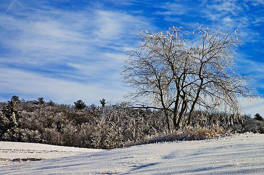 Winter Tree by Susan Leggett
