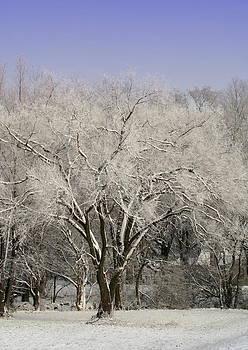 Diane Merkle - Winter Trees