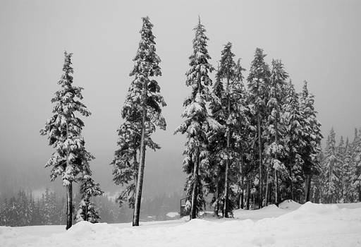 Marilyn Wilson - Winter Trees on Mount Washington - bw