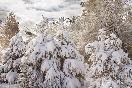 Winter Wonderland by James BO  Insogna