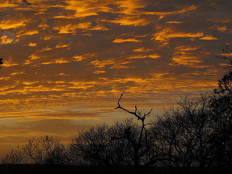 Wispy Sunset Clouds by Rebecca Cearley