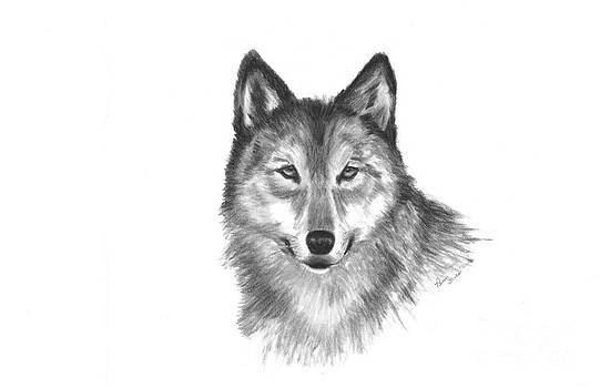 Wolf by Pam Fries