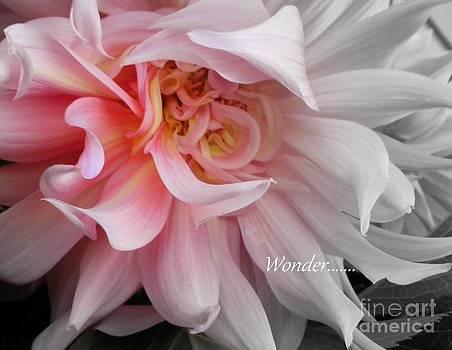 Wonder by Sian Lindemann