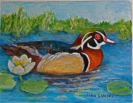 Wood Duck by Joan Landry