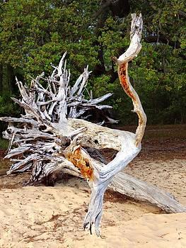 Wood Sculpture by Joan Meyland