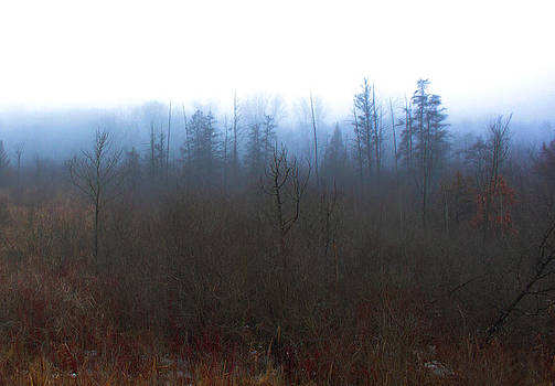 Wooded Mist by Micheal Landers