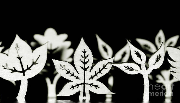 Simon Bratt Photography LRPS - Wooden leaf shapes in black and white