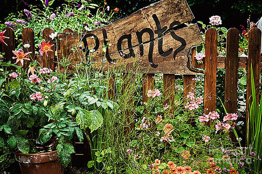 Simon Bratt Photography LRPS - Wooden plant sign in flowers