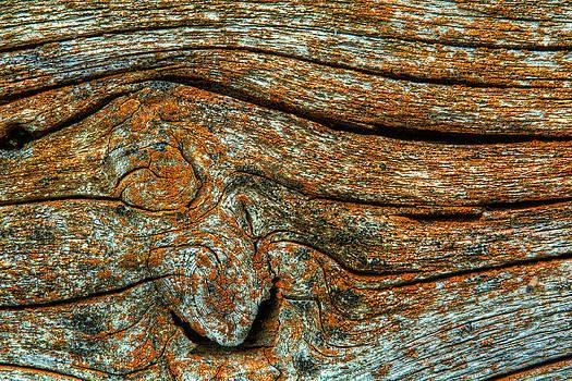 Matt Dobson - Wooden Waves