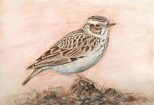 Woodlark in the day-break by Deak Attila