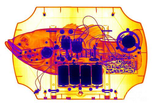 Ted Kinsman - X-ray Of Mechanical Fish