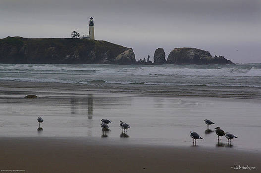 Mick Anderson - Yaquina Head and Seagulls