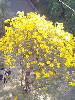 Yellow Blossom by Bgi Gadgil