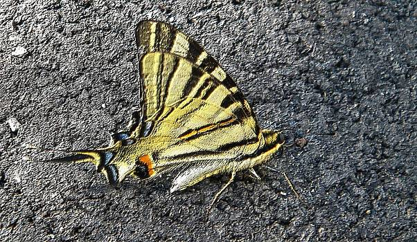 Yellow butterfly by Manuela Constantin