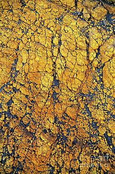 Sami Sarkis - Yellow crust