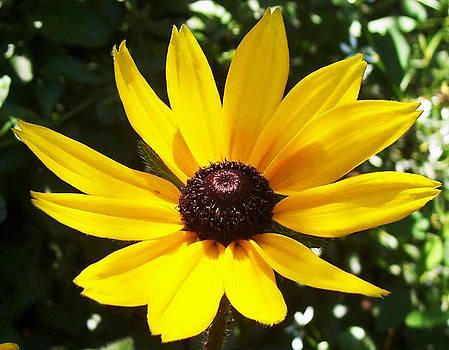 Yellow Daisy by Tanya Moody