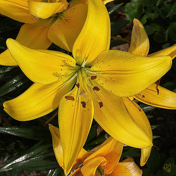 Yellow Day Lily by Barbara Middleton