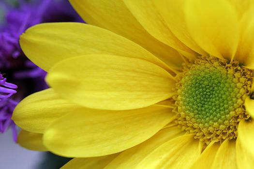 Yellow Flower by Laura Tucker