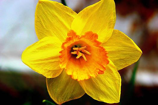 Yellow Flower by Melissa Richter