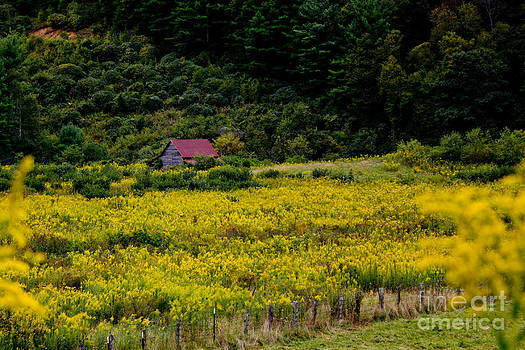 Yellow Flowered Pasture by Tom Carriker