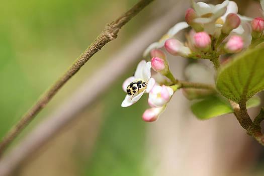 Yellow Ladybird by Swoosh-e Photography