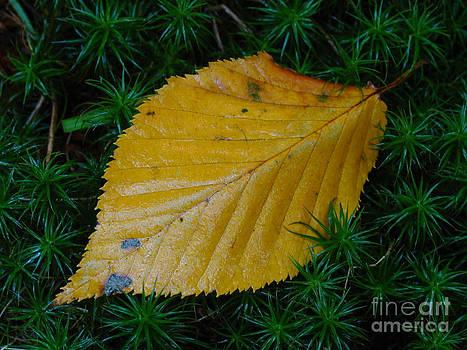 Juergen Roth - Yellow Leaf