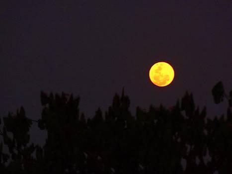 Xafira Mendonsa - Yellow Moon