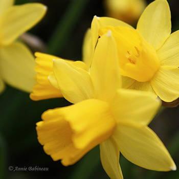 Anne Babineau - yellow spring