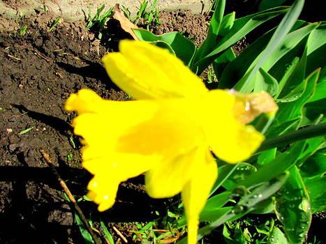 Yellow Sunshine by Amy Bradley