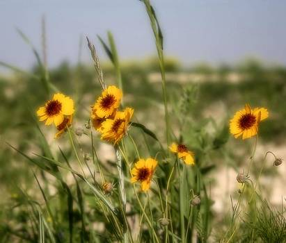 Lynnette Johns - Yellow Wildflowers
