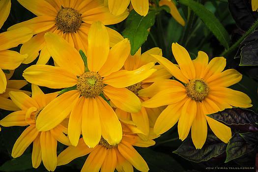 Yellow YelloW by Virag Yelegaonkar
