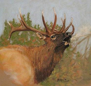 Yellowstone Elk by Turea Grice