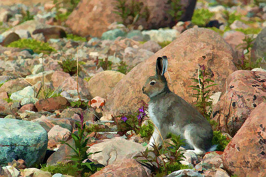 Young Arctic Hare on Alert by Dennis Fast