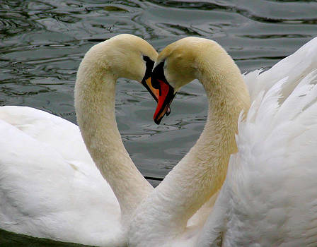 Young Love by Zannie B