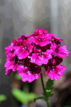 Your Bouquet by Bob Whitt