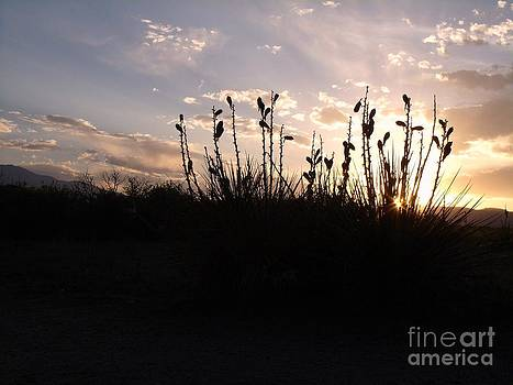 Yucca Twilight by Donna Parlow