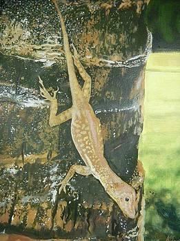 Zandoli lizard by Kelvin James