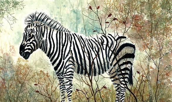Zebra Study by Steven W Schultz