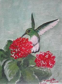 Zumbadorcito by Judith Correa